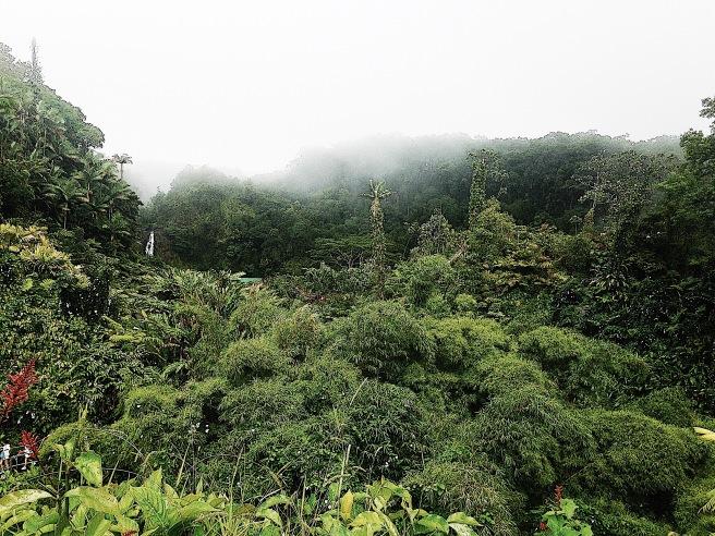 Akaka Falls Park in Hilo Hawai'i